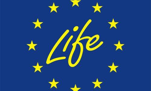 Life plus logo