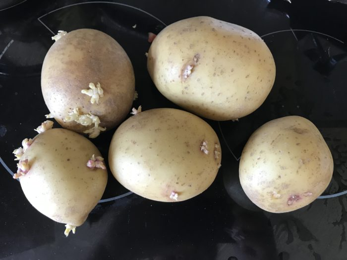 Sprouting spuds