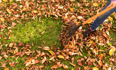 A person raking leaves from a lawn